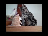 Говорящий хомяк и кот)))